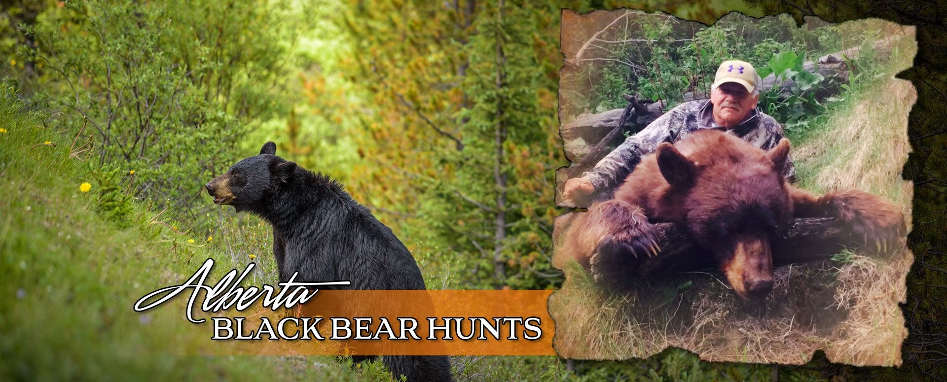 Alberta Black Bear Hunts Banner