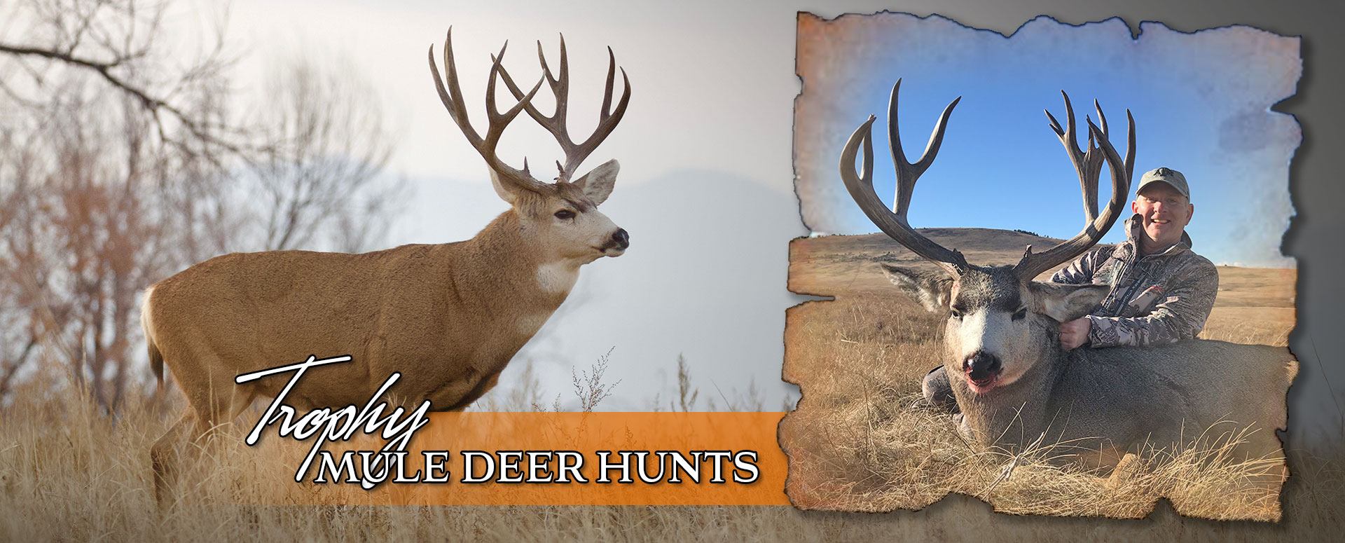 Alberta Mule Deer Archery Hunts